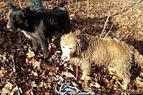 Hasiči vyprošťovali psa (na snímku jde o psa světlejší barvy) z nory od nutrií
