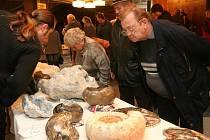 Některé exponáty prodejní výstavy minerálů, která se konala v sobotu v Plzni, mohou připomínat i život