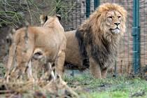 Teplá počasí vylákalo zvířata v Zoo do vnějších výběhů
