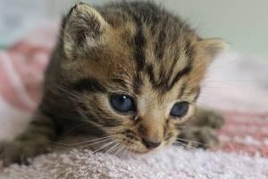 Odložená koťata, ilustrační snímek.