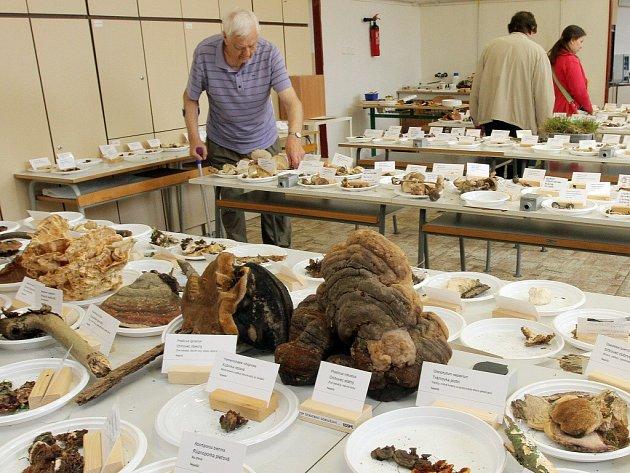 Na pedagogické fakultě na Chodském náměstí je k vidění 277 druhů hub