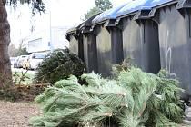Vyhozené vánoční stromky u kontejnerů v Šimerově ulici na Borech