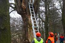 Kácení stromů v Kilometrovce