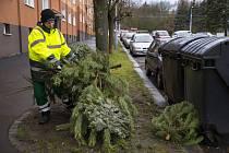 Vývoz vánočních stromků.