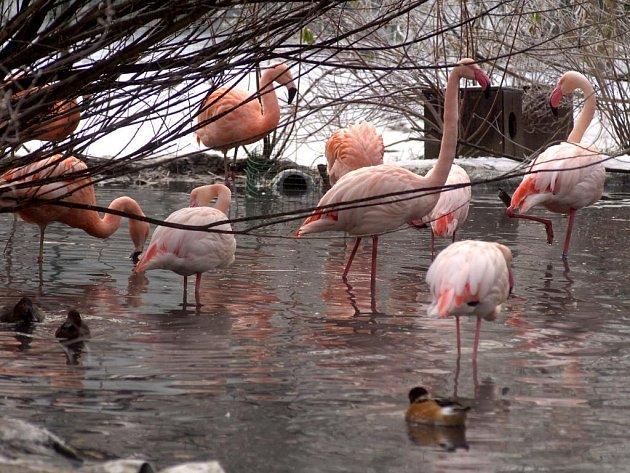 Zimní nálada v plzeňské zoo