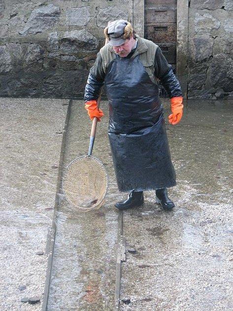 Jeden z rybářů Správy veřejného statku města Plzně vybírá ze sádky podlední malé rybky, aby se sádka zazimovala. Od včerejška je prázdná. Skončil prodej vánočních kaprů.