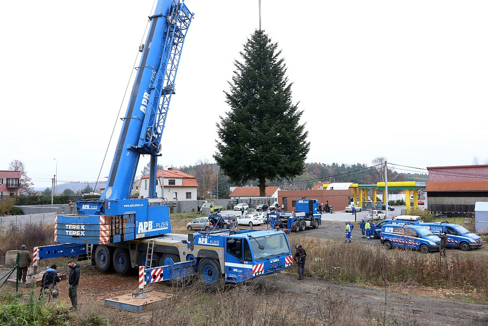 vánoční strom pro Plzeň soukromá zahrada Kařez