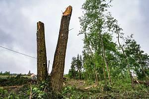 V Třemošné u Plzně bylo ve vegetačním období vysekáno několik desítek stromů, které byly útočištěm pro hnízdící ptactvo a jejich mláďata.