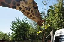 Návštěva zoo.