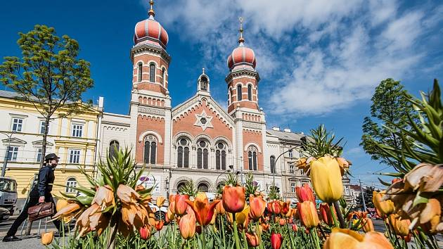 Péče o zeleň stojí Plzeň ročně desítky milionů korun.