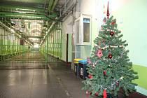 Umělé vánoční stromečky jsou v borské věznici postavené přes svátky hned v několika chodbách.