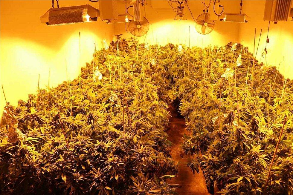 Policie odhalila tři pěstírny marihuany na Plzeňsku a v Plzni.