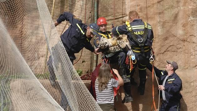 Levhartici museli ze skály pomoci hasiči