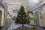 Vánoční strom ve věznici na Borech