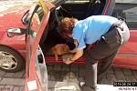Dívka nechala psa v horkém autě.