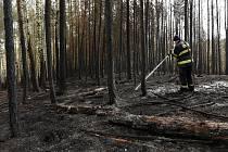 Následky požáru lesa u Chotíkova