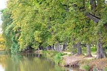 Lipová alej u velkého rybníka v Plasích vede k bývalému cisterciáckému klášteru