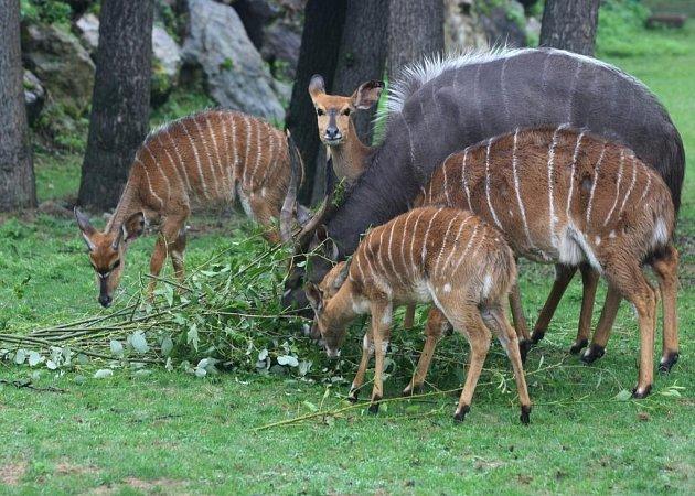 Nový výběh nyal v plzeňské zoo