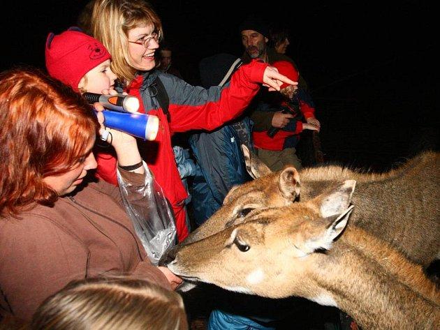 Průvodkyně Zuzana Holubová krmila s dětmi antilopy nilgau nakrájenými jablky.
