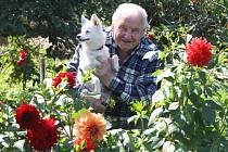 Známý plzeňský pěstitel Vlastimil Hucl se svým čtyřnohým přítelem uprostřed jiřinové zahrady