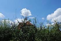 Rostliny na zahrádkách některých obyvatel severoplzeňské Žihle začaly usychat a vadnout. Děje se tak pravděpodobně kvůli práškování pole, u kterého domy stojí.