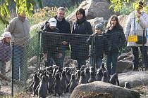 Krmení tučnáků v plzeňské zoo