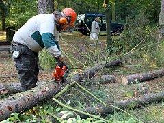 První smrky napadené kůrovcem padly včera v Borském parku pod pilami dřevorubců.  Celkem má být poraženo 15 stromů