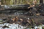 V pondělí se střetl vlak se stromem na trati Plzeň - DOmažlice - Furth im Wald. Nehoda se stala nedaleko České Kubice, obešla se bez zranění