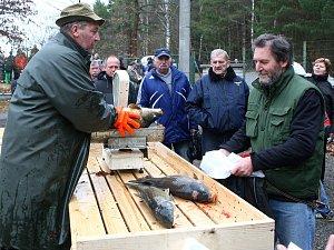 Prodej kaprů a stromků u rybníku Košinář
