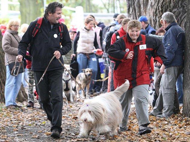V plzeňské Kilometrovce se konal sedmý ročník psího běhu.