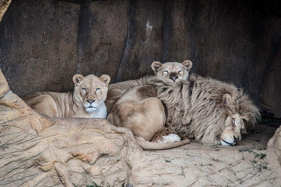 Zoologická zahrada Plasy.