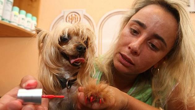 Majitelé nechávají svým psím miláčkům lakovat i nehty. V módě jsou zářivé barvy.