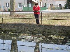 Průhledná hladina  hasičské nádrže v Nových Mitrovicích je minulostí. Sužují ji nánosy bahna či vodní tráva