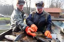 U rybníka Košinář začal prodej vánočních kaprů