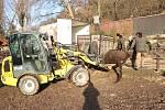 Tříletý Ontario odjel v úterý z plzeňské zoo