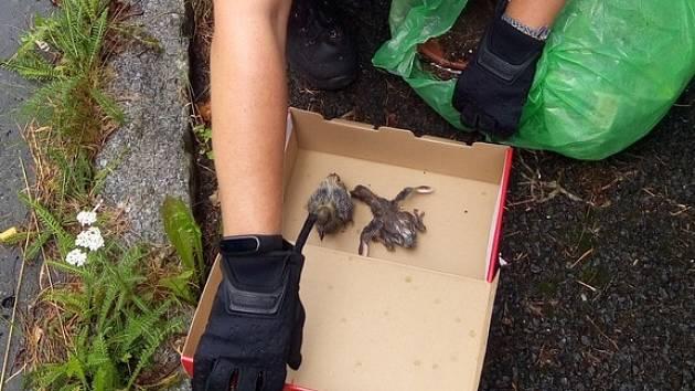Nalezená ptačí mláďata.