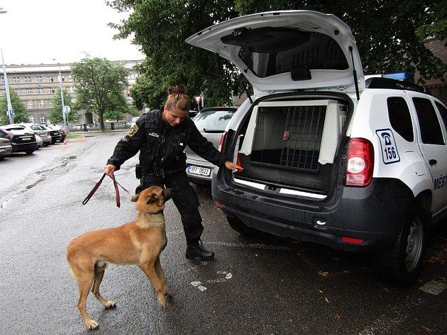 Psovodka městské policie se služebním psem. Ilustrační foto