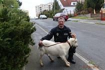 Městská policie odchytila na Severním předměstí kozu domácí