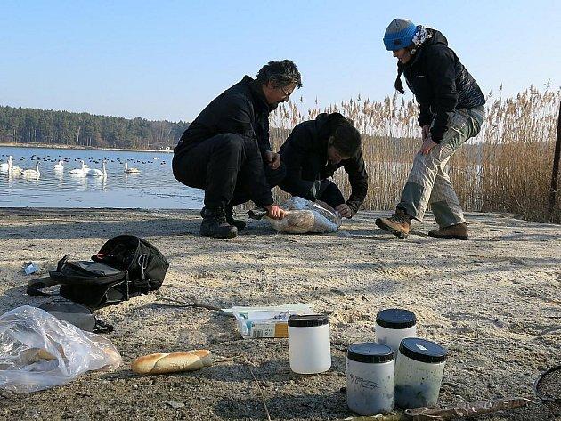 Parazitologové z Karlovy univerzity v Praze odebrali na Boleváku vzorky trusu vodních ptáků