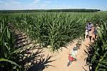 Bludiště ve více než dvoumetrové kukuřici můžete navštívit v Červeném Hrádku u Plzně.