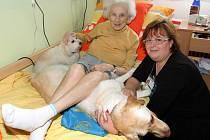 Canisterapie. Léčebnou metodu zavedla do Domovinky právě Bohumila Hajšmanová (vpravo na snímku). Na fotografii je s klientkou Danuší Volínovou a pejsky Hessy a Amy