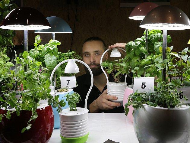 Interiérové zahrádky Growlight představuje Jiří Nývlt. Speciální květináč s lampičkou si dáte na stůl a bylinky trháte do čaje nebo salátu. Funguje to už i v některých hotelech.