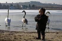 Na Bolevák se vrátili ptáci