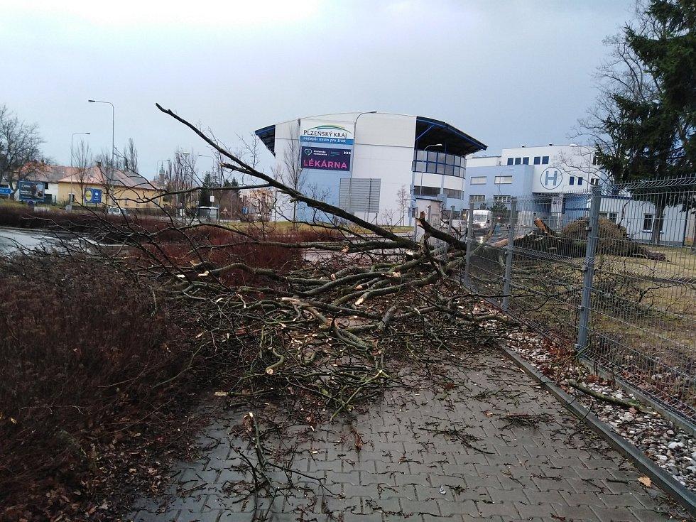 Vichřice Sabine vyvrátila strom u vjezdu do Klatovské nemocnice.
