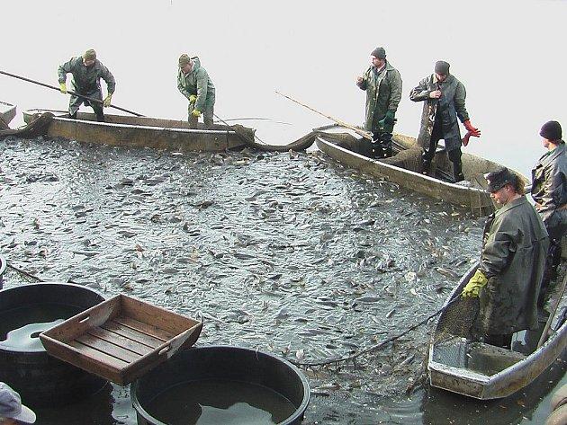 Rybáři ze Ždírce při výlovu Hunčického rybníka.