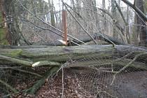 Vyvrácené stromy u Tenisových kurtů a pod Kotlem na Rokycansku