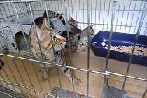 Koťata nalezená u Borské přehrady
