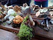 Mykologická exkurze u Konstantinových Lázní.
