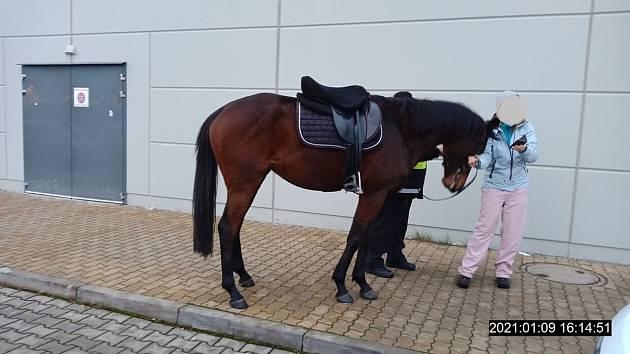 Městská policie v Plzni odchytávala koně.