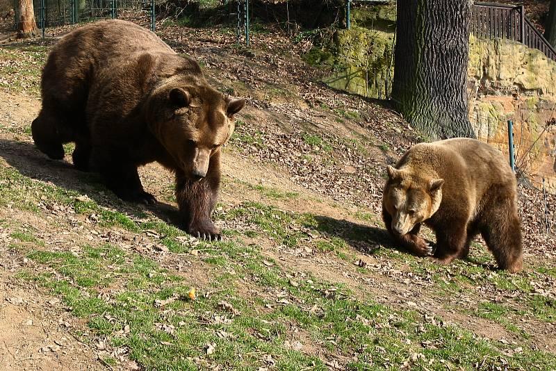 Co dělat když v přírodě potkáte medvěda, Mluvte klidně hlubokým hlasem, tak medvěd pozná, že jste člověk.